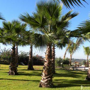 Các loại cây được bố trí trong nội khu Sunshine Diamond River